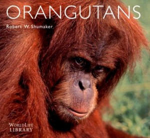 Orangutans by Rob Shumaker